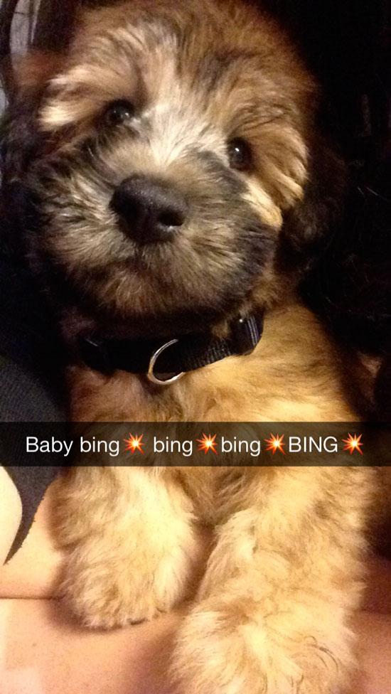 BabyBingBing1st