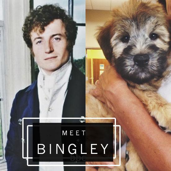 BINGLEY&BINGLEY